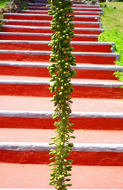 Agave Landscapes Nature Plant Vegetable Infloresce