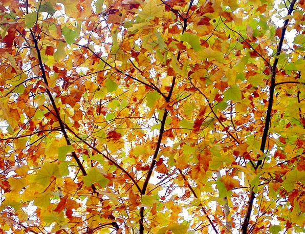 Autumn Fall Wood Timber Autumn Leaves The Leaves R