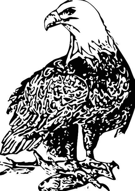 Eagle Bare Bird Fowl Bald Freedom Raptor Predator