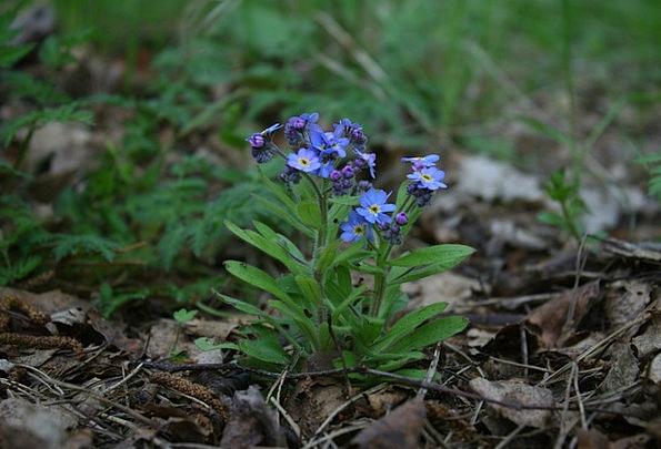 Forget Overlook Landscapes Floret Nature Forest Wo
