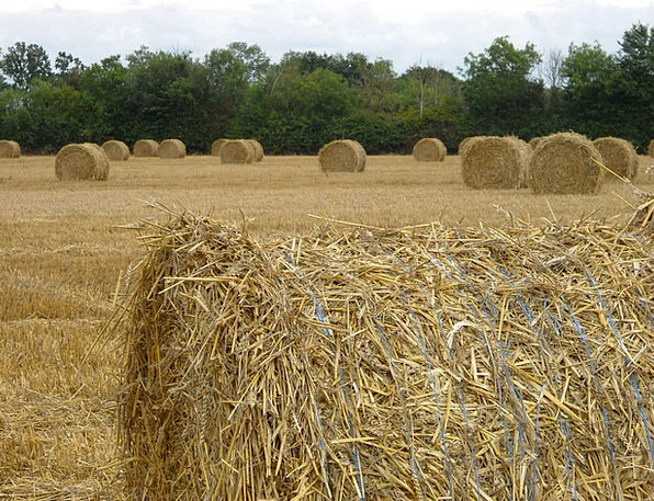 Straw Grass Crop Agriculture Farming Harvest