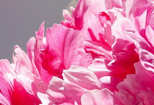 Pentecost Landscapes Bunch Nature Peony Bouquet Lu