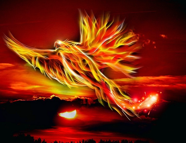 Phoenix Fowl Fire Passion Bird Wing Sun Sky Bright