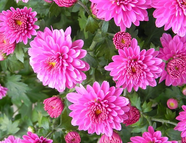 Gerbera Landscapes Instruction Nature Flower Flore
