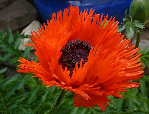 Flower Floret Landscapes Bloodshot Nature Plant Ve