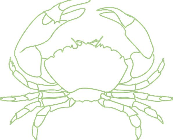 Crab Shellfish Sea Life Crustacean Lobster Crayfis