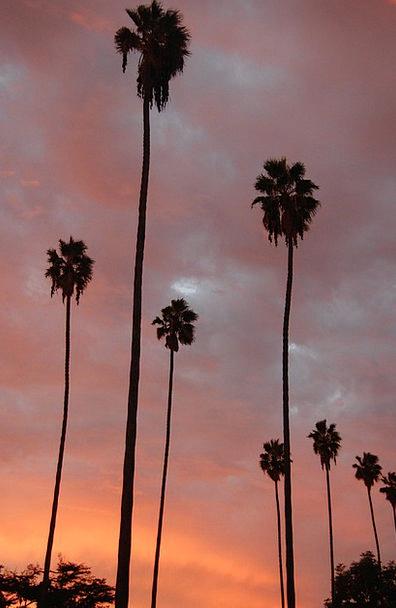 Palm Trees Vacation Tributes Travel Sunset Sundown