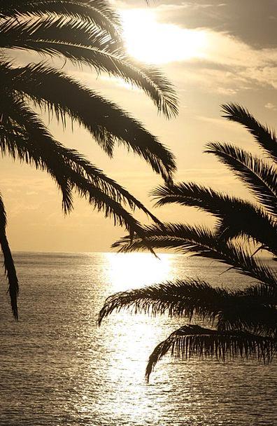Sunset Sundown Vacation Marine Travel Palm Tribute