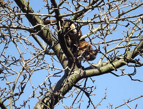 Cat Feline Sapling Organic Carbon-based Tree Wildl