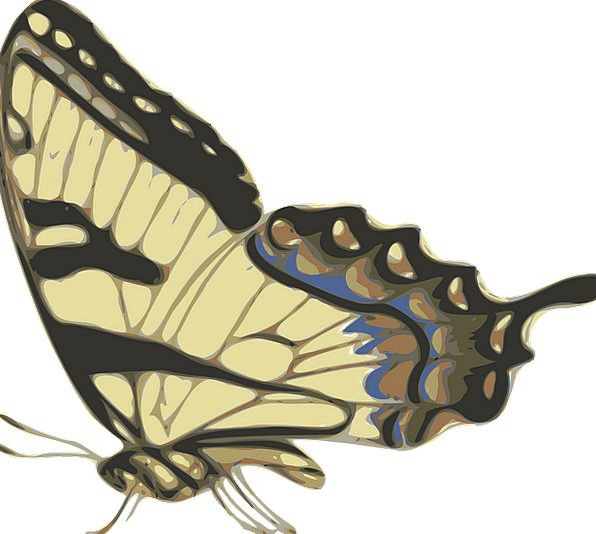 Butterfly Chocolate Patterned Decorative Brown Fly