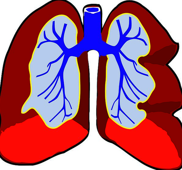 Lungs Structure Biology Ecology Organ Medicine Res