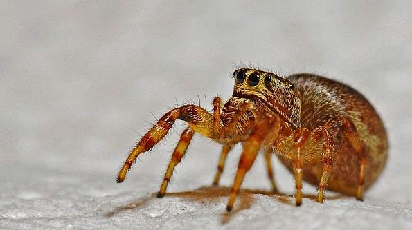 Spider Macro Instruction Arachnid Insect Bug Anima