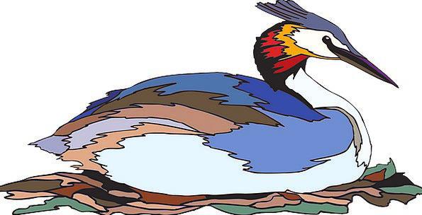 Bird Fowl Crested Grebe Colors Insignia Rest Nesti