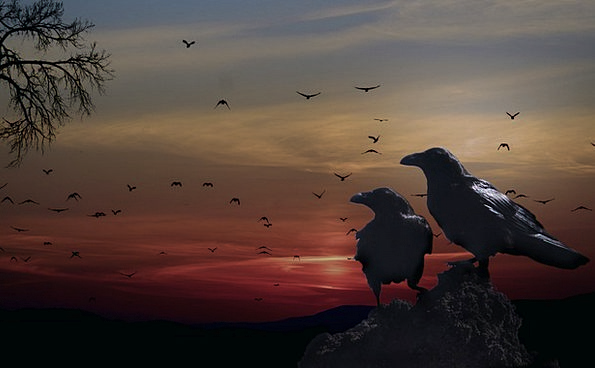 Crows Caws Vacation Natures Travel Sunset Sundown