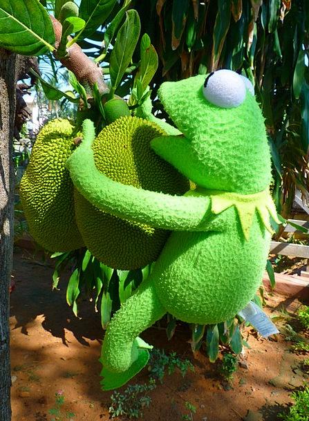Jack Knave Drink Ovary Food Green Lime Fruit Large