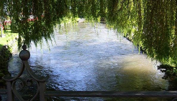 Tree Sapling Aquatic Mirroring Reflecting Water Na