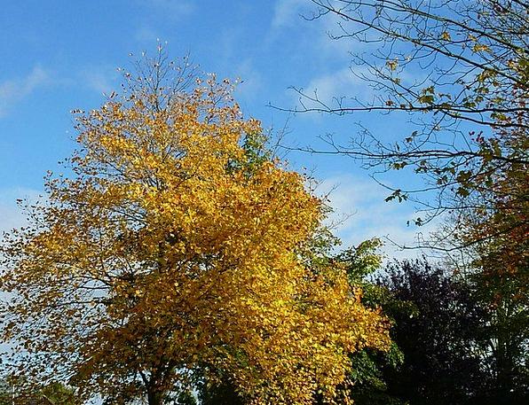 Autumn Mood Autumn Fall Fall Foliage Emerge Leaves