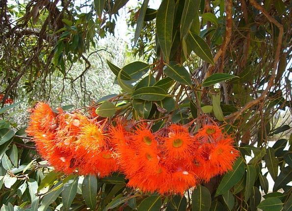 Exotic Flowers Landscapes Flower Nature Nature Cou