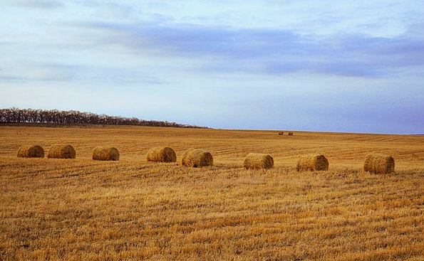Hay Landscapes Bundle Nature Bales Bundles Bale Ha
