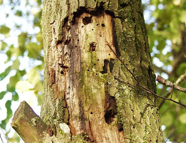 Log Record Landscapes Nature Injury Wound Morsch B