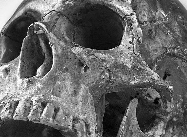 Skull Mind Hue Teeth Fangs Color