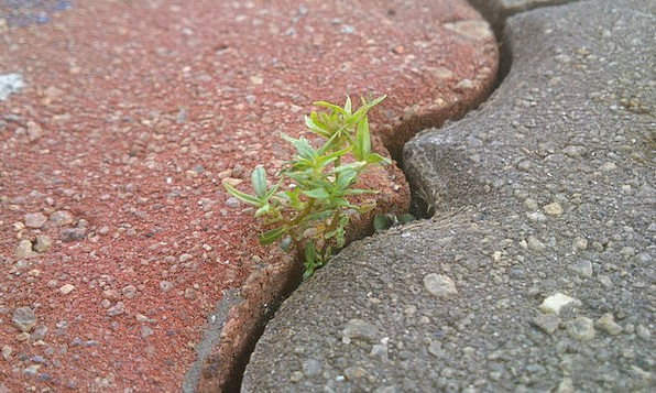 Life Lifetime Landscapes Willpower Nature Bricks E