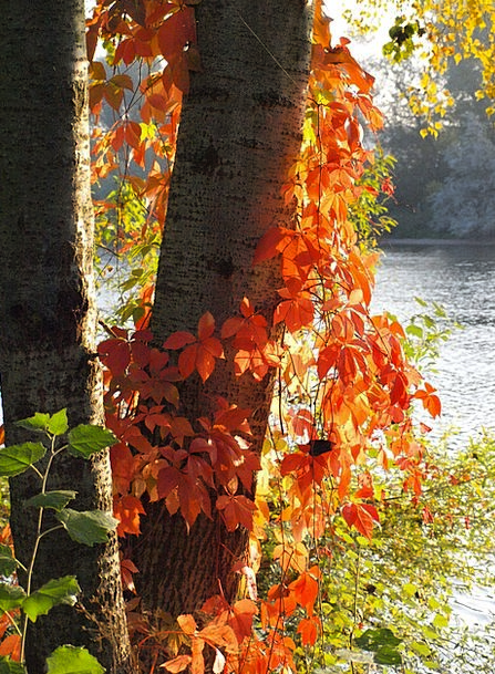Wine Partner Autumn Fall Red Leaves Fall Foliage C