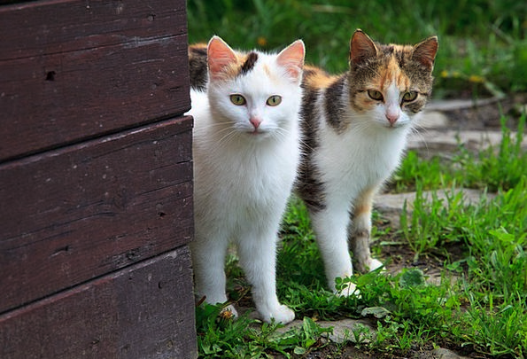 Animal Physical Couple Twosome Cat Little Curious