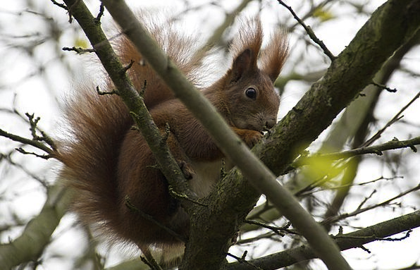 Squirrel Collector Landscapes Plot Nature Time Of