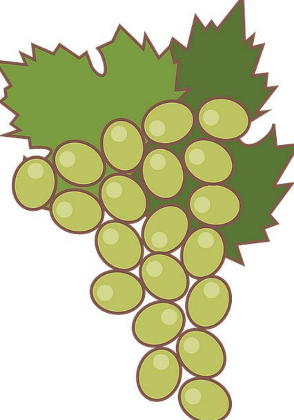 Grape Drink Ovary Food Green Grapes Fruit Catering