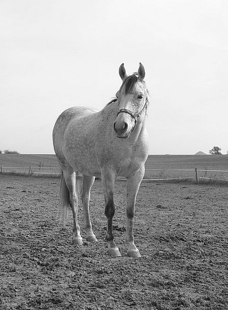Horse Mount White Snowy Black And White Pasture Me