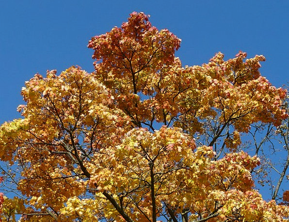 Crown Top Fall Coloring Complexion Autumn Tree Far