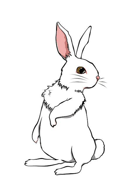Rabbit Bunny Physical Cute Attractive Animal