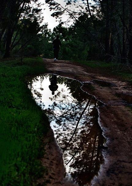 Corridor Strip Gait Pinewood Walk Water Aquatic Pu
