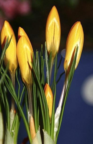 Daffodils Landscapes Plants Nature Bouquet Bunch F