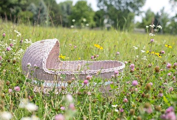 Baby Bassinet Pink Flushed Bassinet Wildflowers We