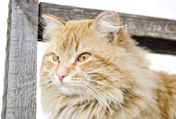Cat Feline Catlike Kitten Young Kitty Fund Domesti
