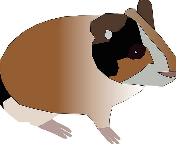 Guinea Pig Pet Domesticated Hamster Free Vector Gr