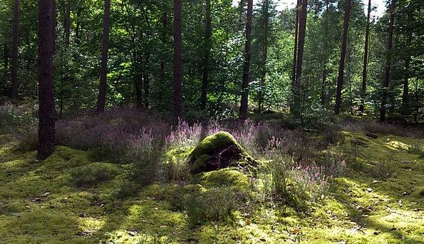 Undergrowth Scrub Landscapes Woodland Nature Heath