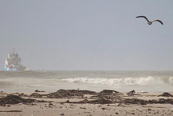 Beach Seashore Vacation Travel Fly Hover Gull Sea