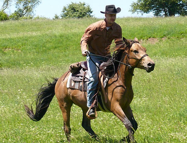Rodeo Competition Unreliable Rider Proviso Cowboy