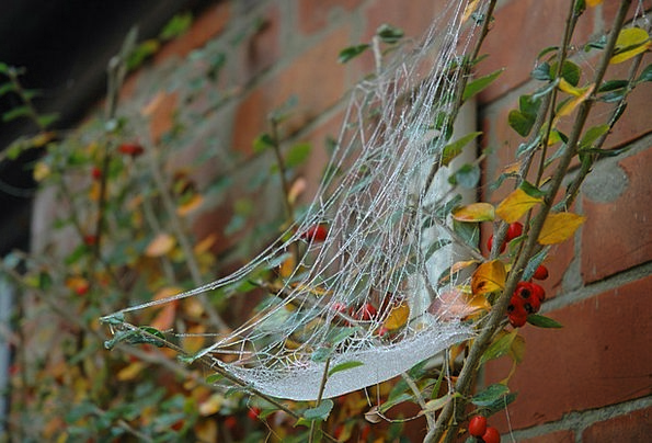 Spiderweb Ice Autumn Fall Frost Web Mesh Cobweb Co