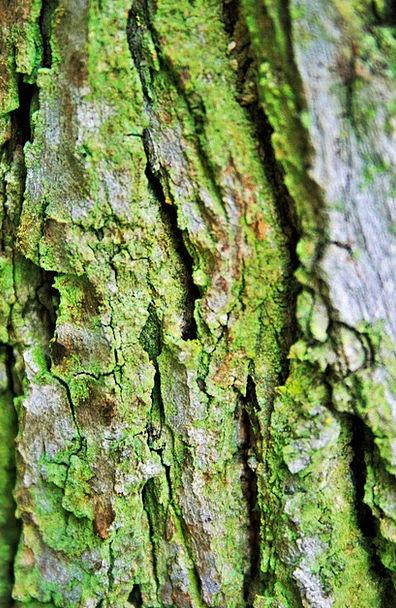 Tree Bark Bay Trunk Stem Bark Tree Sapling Moss Ro