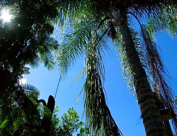 Palm Tribute Sapling Palms Tributes Tree Blue Azur
