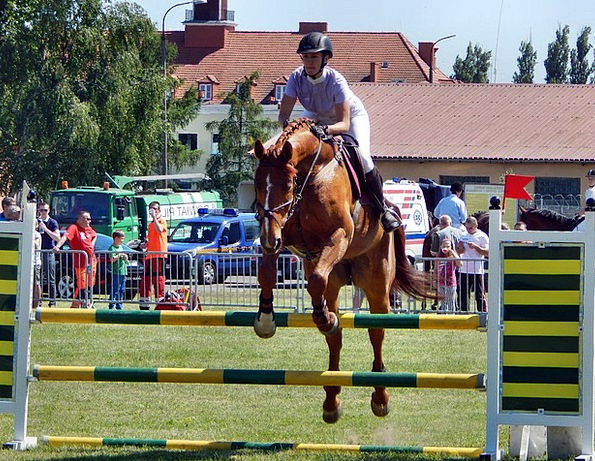 The Horse Horses Cattle Galop Hooves Animal Jump P