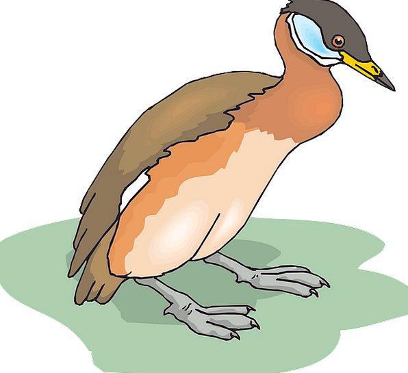 Bird Fowl Stoop Grass Lawn Duck Wings Annexes Lean