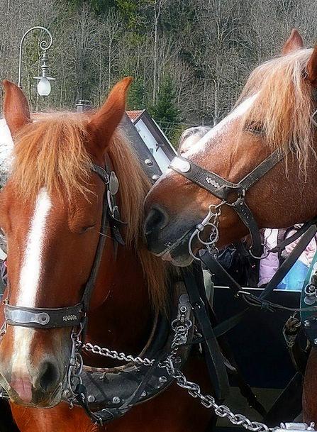 Horses Cattle Vacation Yoke Travel Carriage Bearin