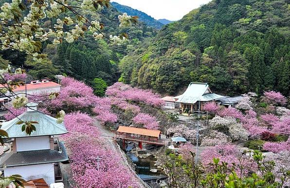 Oita Landscapes Pink Nature Landscape Scenery Cher