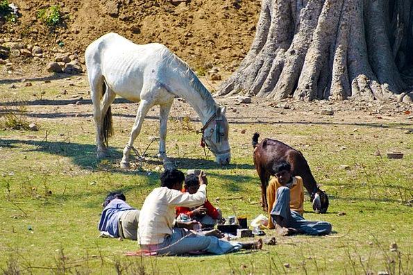 Horse Mount Sapling People Public Tree Graze Goat