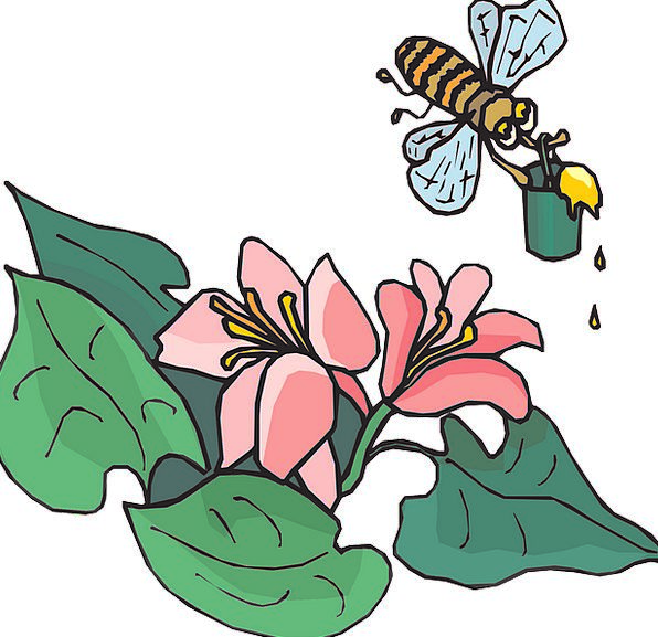 Bee Landscapes Hovering Nature Insects Bugs Flying